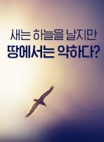 새는 하늘을 날지만 땅에서는 약하다?