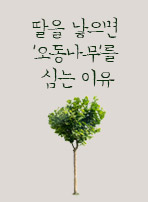 딸을 낳으면 '오동나무'를 심는 이유