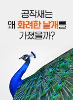 공작새는 왜 화려한 날개를 가졌을까?